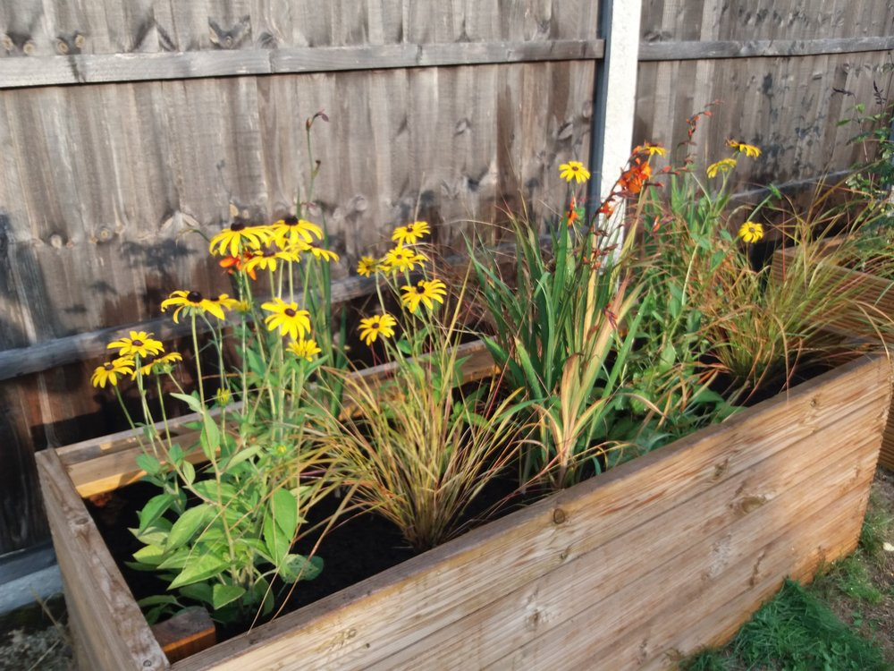 Planting up planters for late summer  and Autumn colour, August 2018