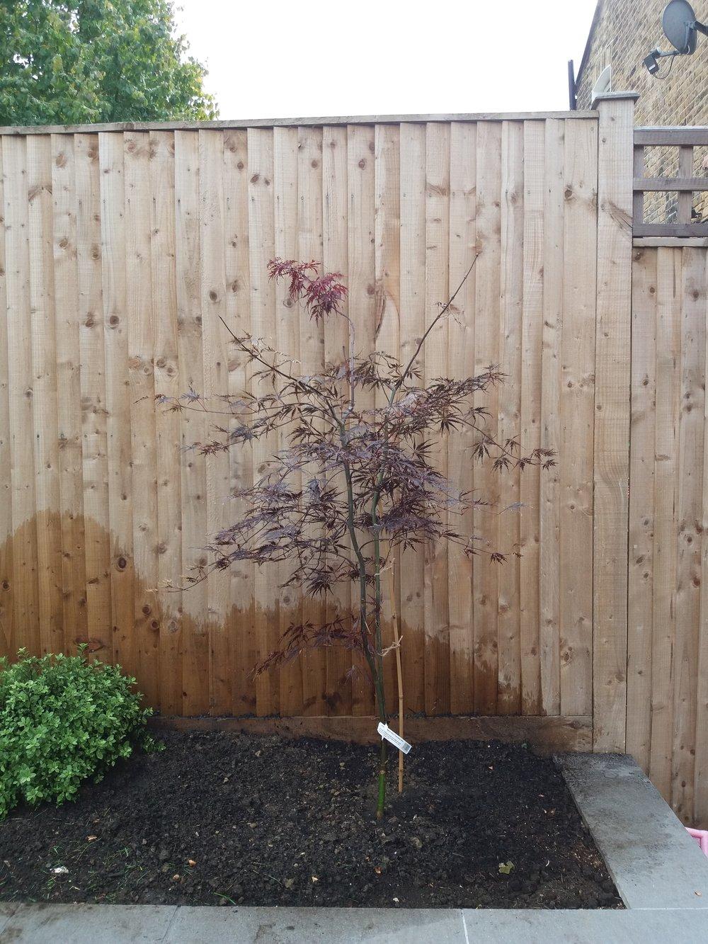 Tree planting, October 2018
