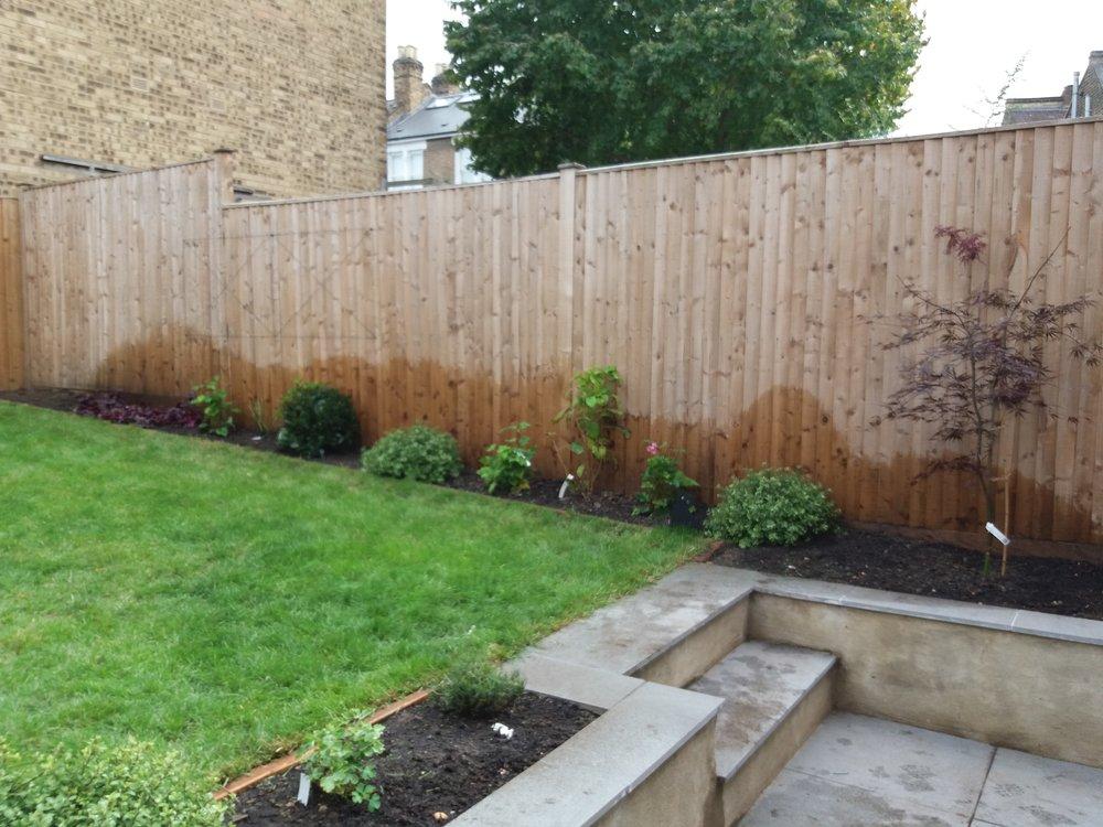 More evergreen shrubs