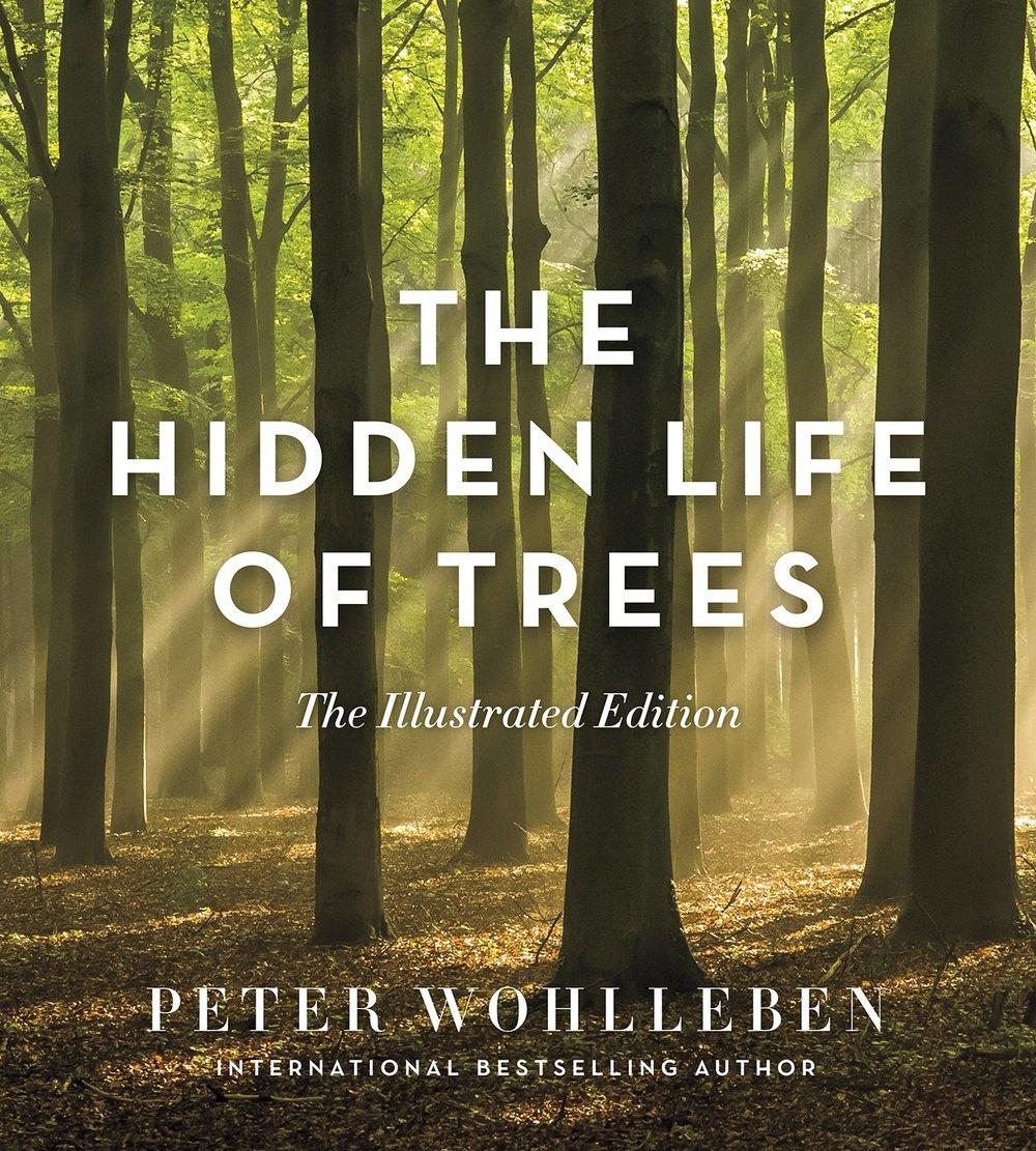 The Hidden Life of Trees.jpg
