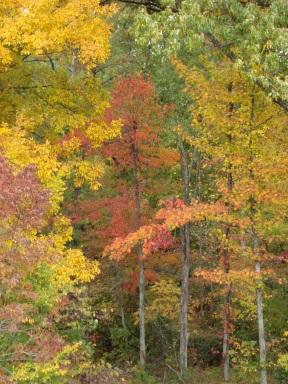 fall2012blog14
