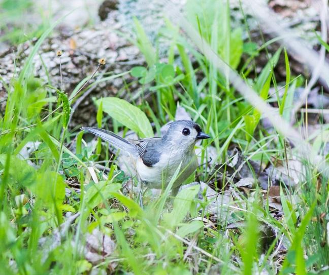 cute-birdblog-2015.jpg