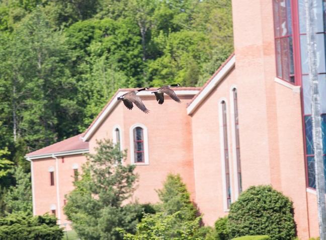 monastery-geese-flyby-2blog-2015.jpg