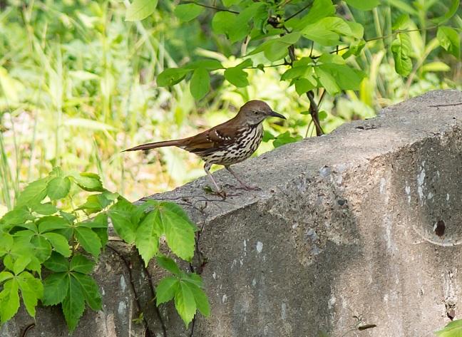 mystery-birdblog2015.jpg