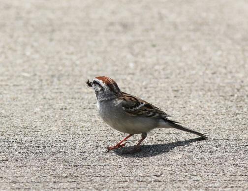sparrow-with-lunchblog2015.jpg