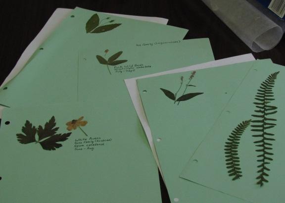 plantcollectionblog