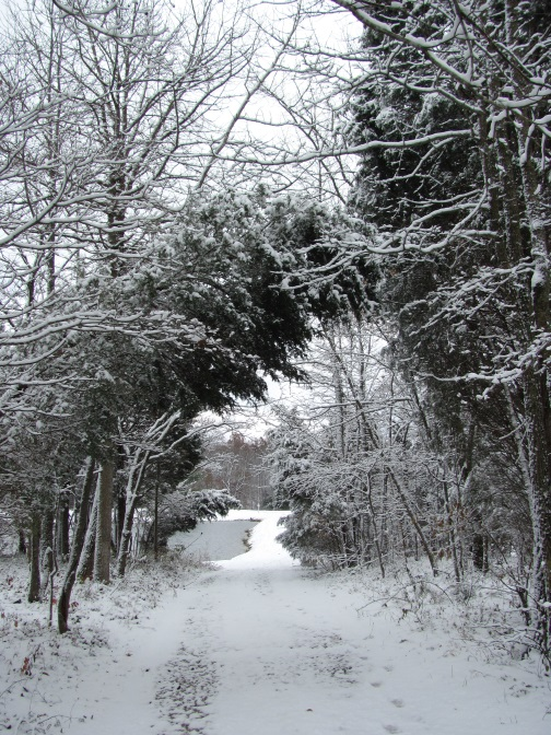 snowy pathblog2014