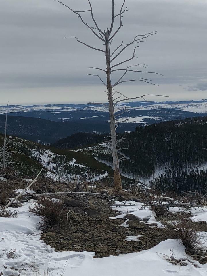 rs old tree.jpg