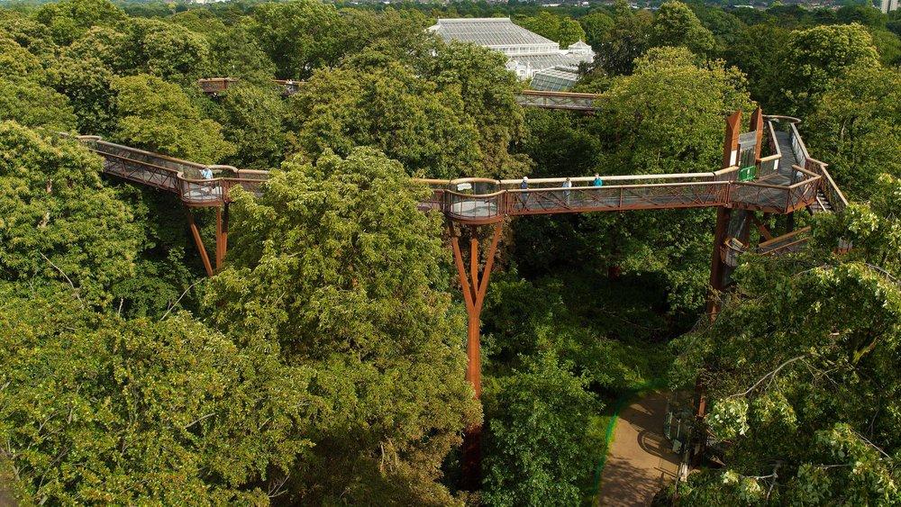treetopwalkway_0.jpg