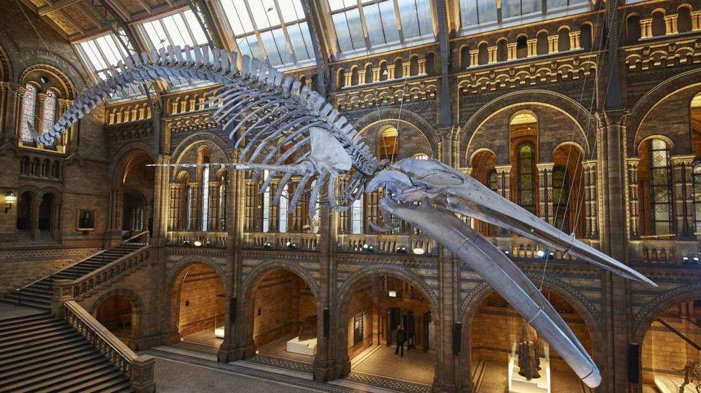 502825-LondonNaturalHistoryMuseum-HED.jpg