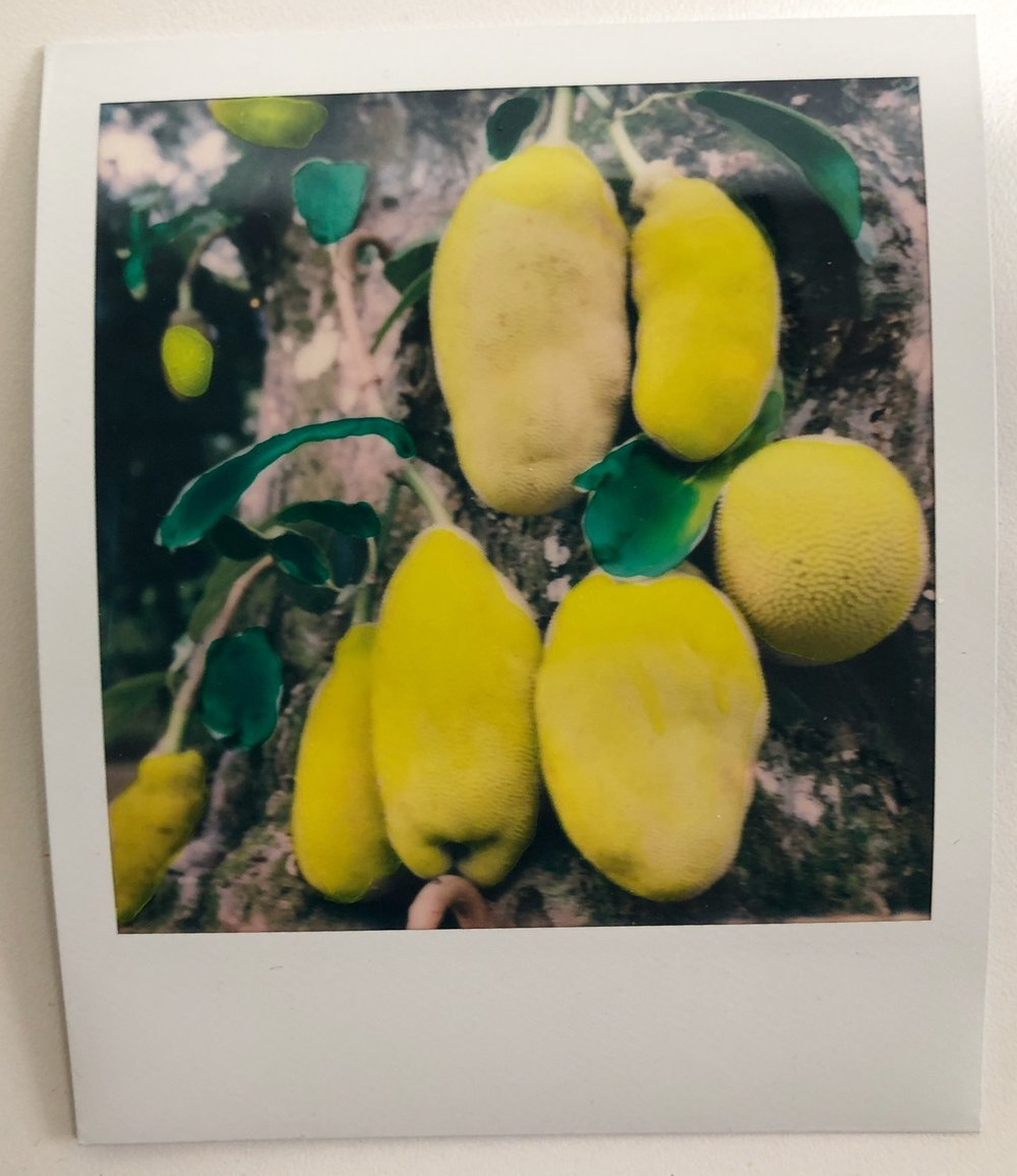 Jack fruit Polaroid by Bia Monteiro