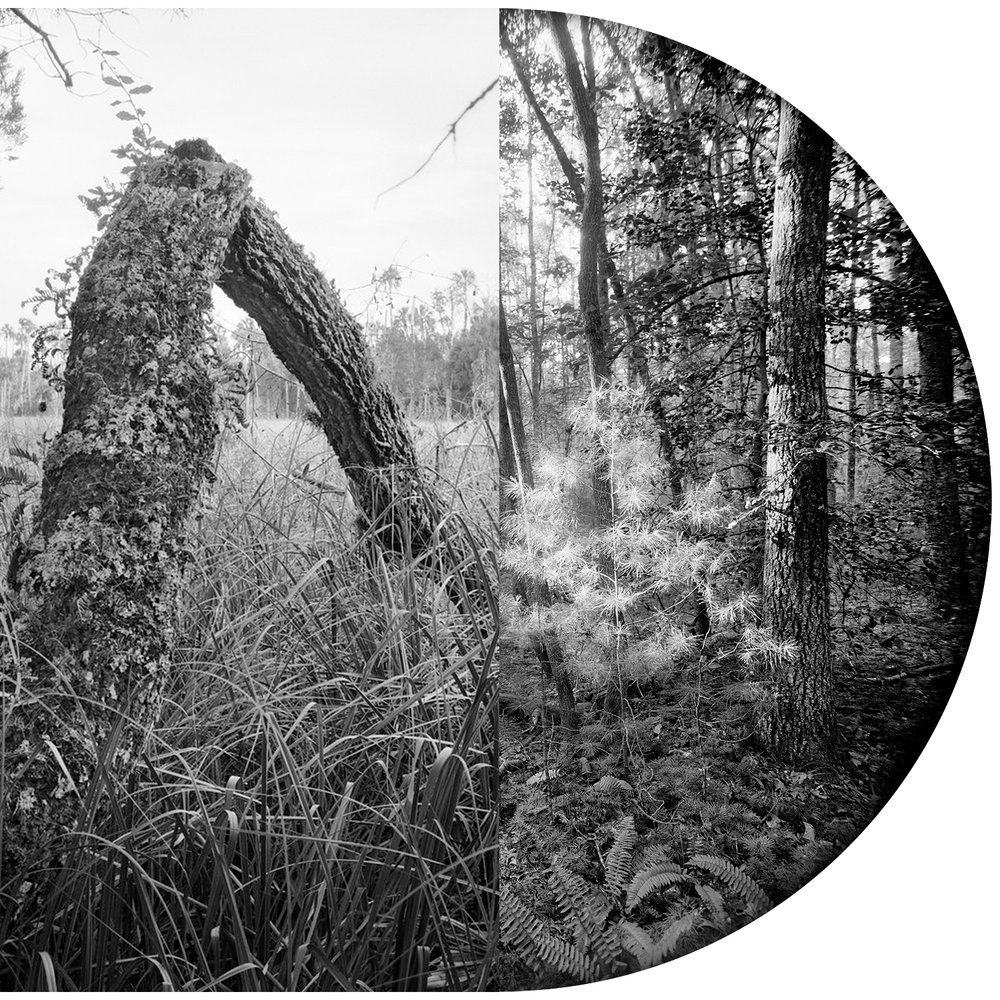 A Dialog in Photographs  DOT Editions