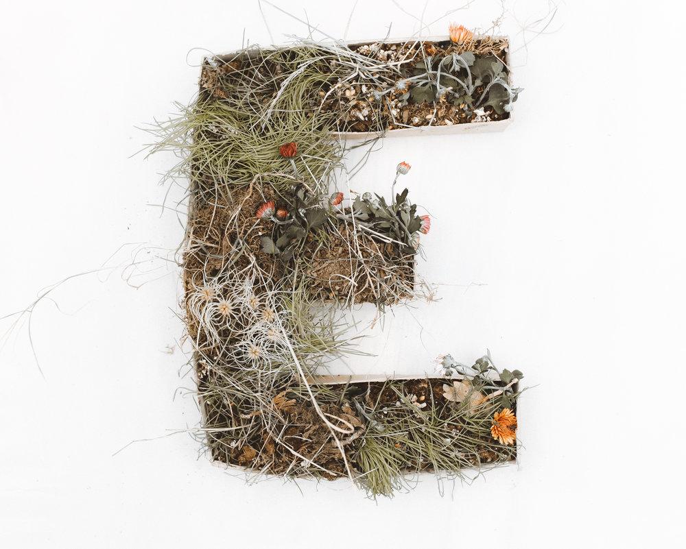 e (1 of 1).jpg