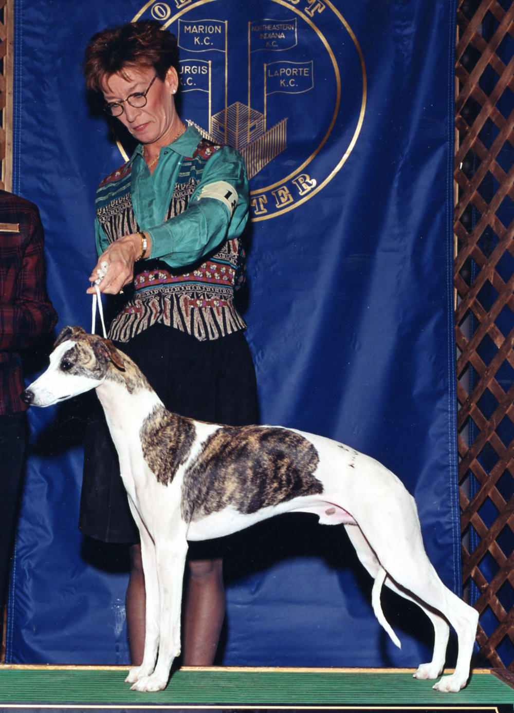 "SBIS Ch. Bohem Circus Runaway, ROM , b. 1999 by Ch. Chelsea Gold Rush of Keynote x Ch. Bohem All About Eve. ""Blaze"" was both owned and shown by Barbara Wayne, who handled so many champions from both Bohem and other kennels. Her premature death was a great blow to us and to the whole Whippet world."