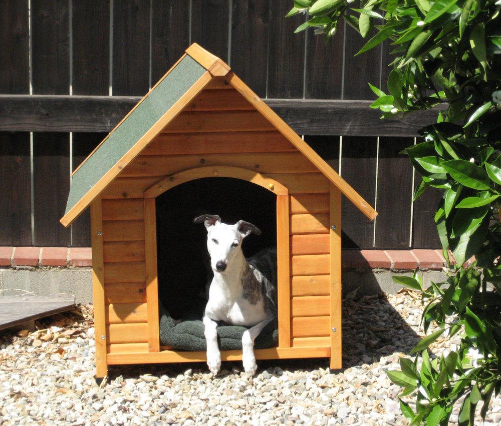 "Ch. Bohem Three Ring Circus, alias ""Chili,"" in ""his"" dog house."
