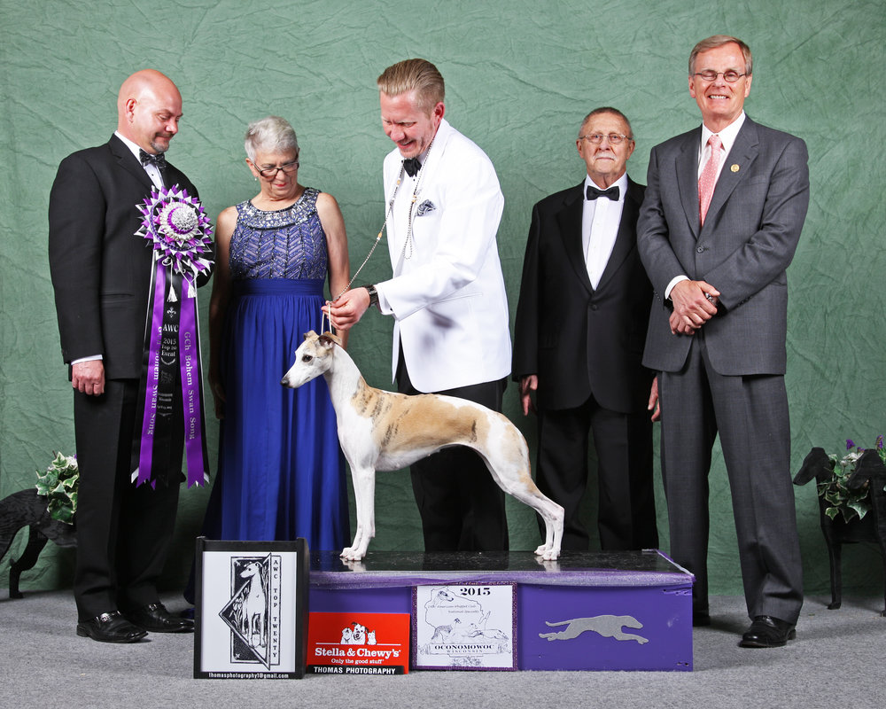 "RBIS GCh. Bohem Swan Song   ""Rosa,"" b. 2011, by GCh. Counterpoint Painted by Bohem, SC x GCh. Charlamar Sashays In White Linen  ""Rosa"" had a brilliant early career, with several Group wins and Res. BIS when it was interrupted as she contracted cancer. Under the loving care of her owner Rosa is now doing well but will not be shown again or bred from.   Bred by Bohem  Owned by Scot Northern & Bohem"