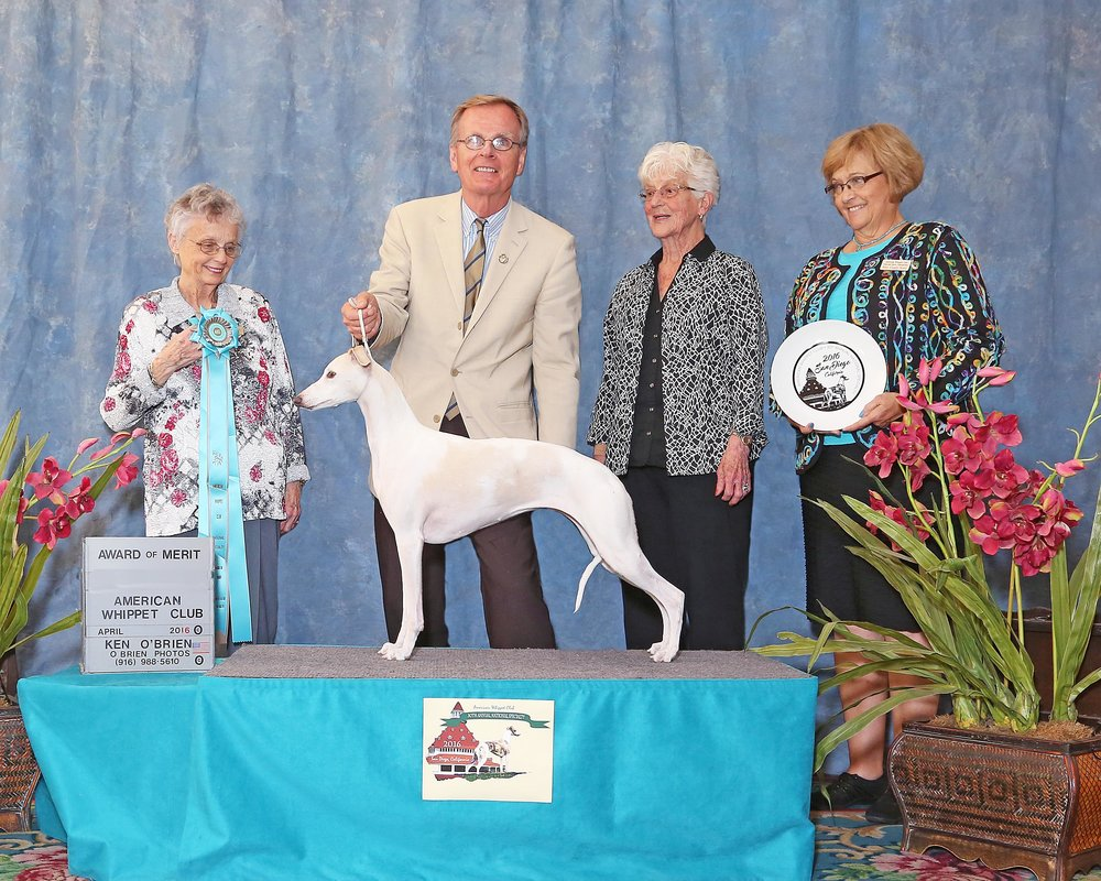 SBIS GCh. Charlamar Sashays In White Linen  (Izzy), b. 2008, by Ch. Bohem Just in Time, CR x Ch. Oxford's Kamio Hope and Glory  Bred by Charlotte Lee & Dianne Bowen  Owned by Bohem
