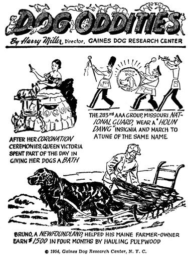 Dog-Oddities.jpg