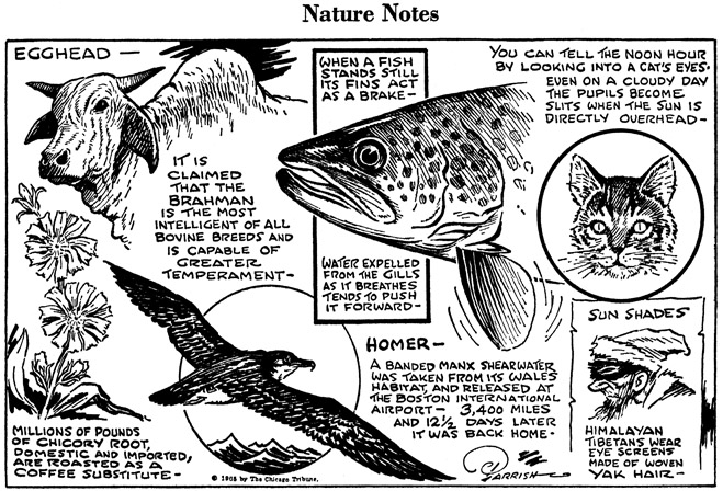 Nature-Notes.jpg