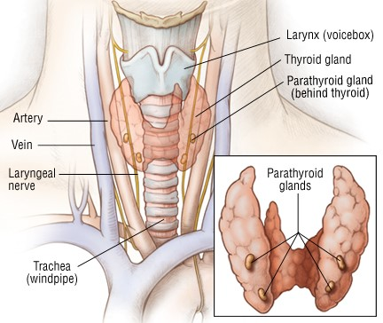 Thyroid Surgery — Downtown Surgery Specialists