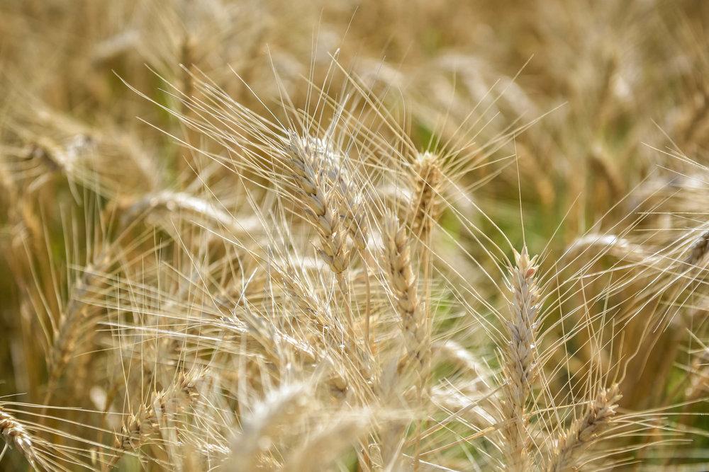 Indigo Agriculture | Plant Microbiome Technology 0014.jpg