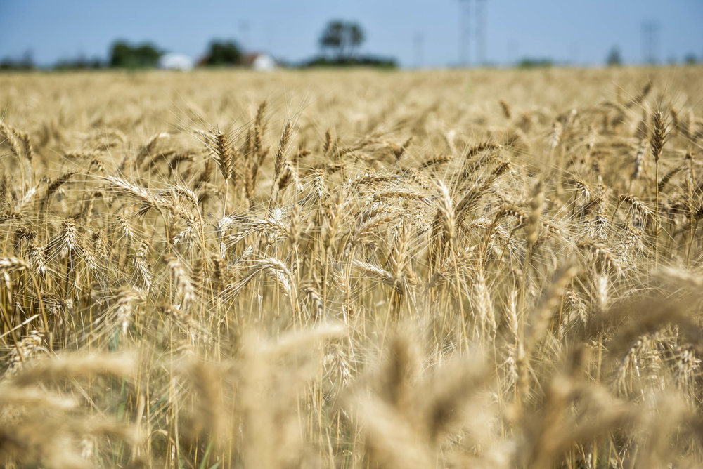 Indigo Agriculture | Plant Microbiome Technology 0026.jpg