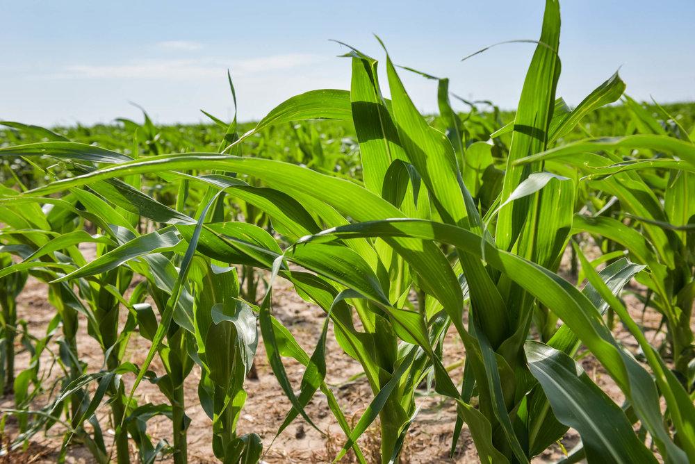 Indigo Agriculture | Plant Microbiome Technology 0057.jpg