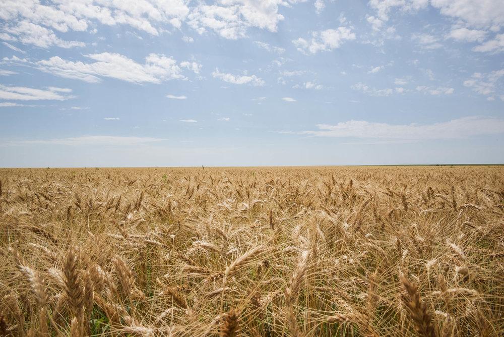 Indigo Agriculture | Plant Microbiome Technology 0071.jpg
