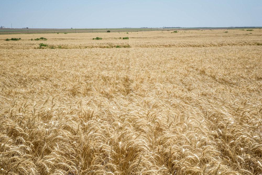 Indigo Agriculture | Plant Microbiome Technology 0087.jpg