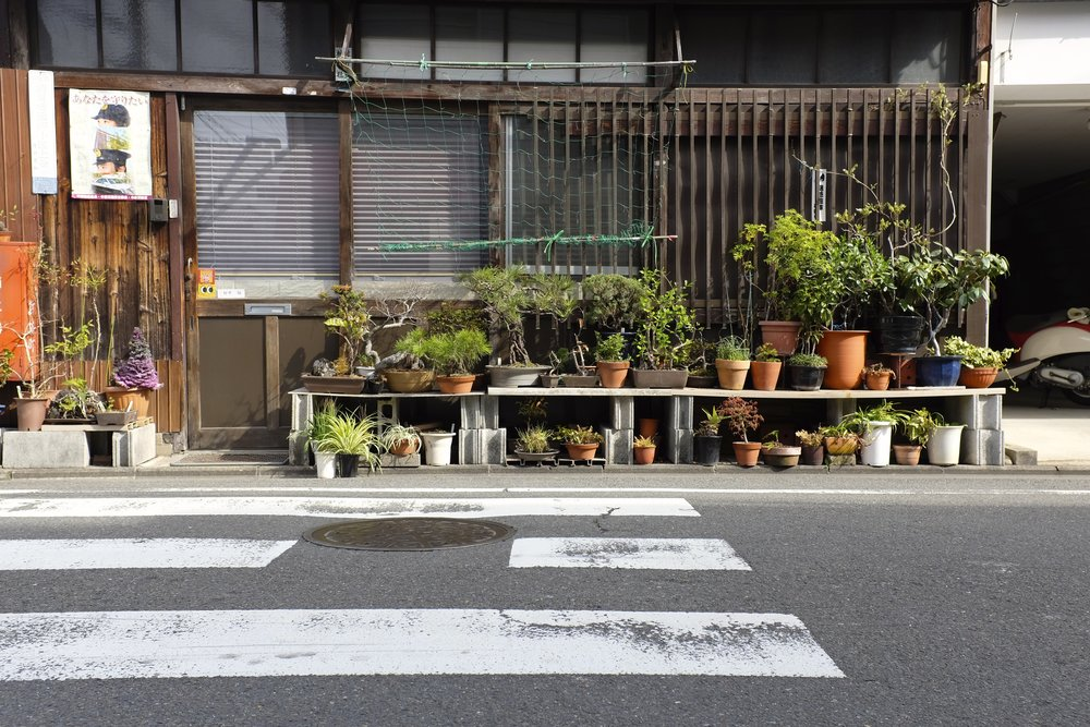 Pot Plants of Japan