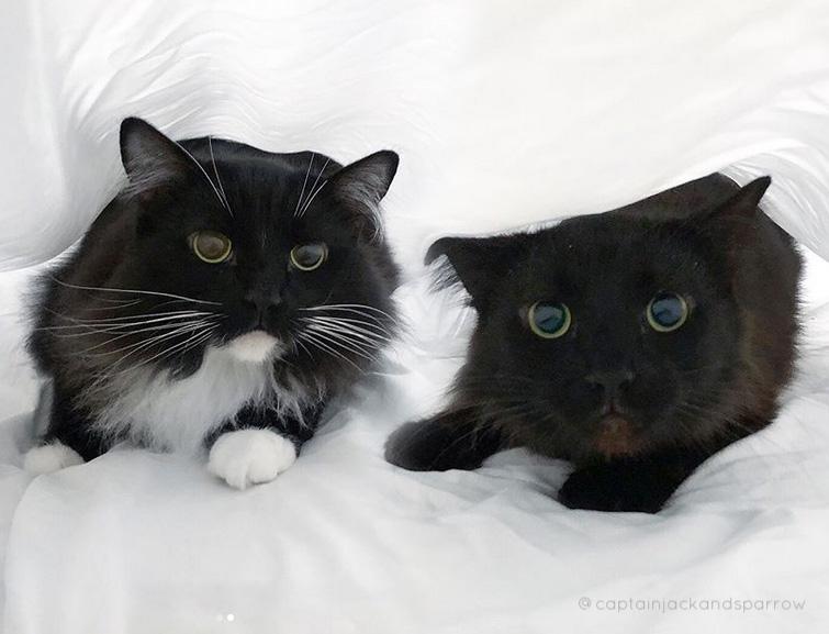 Kessler's Kitties