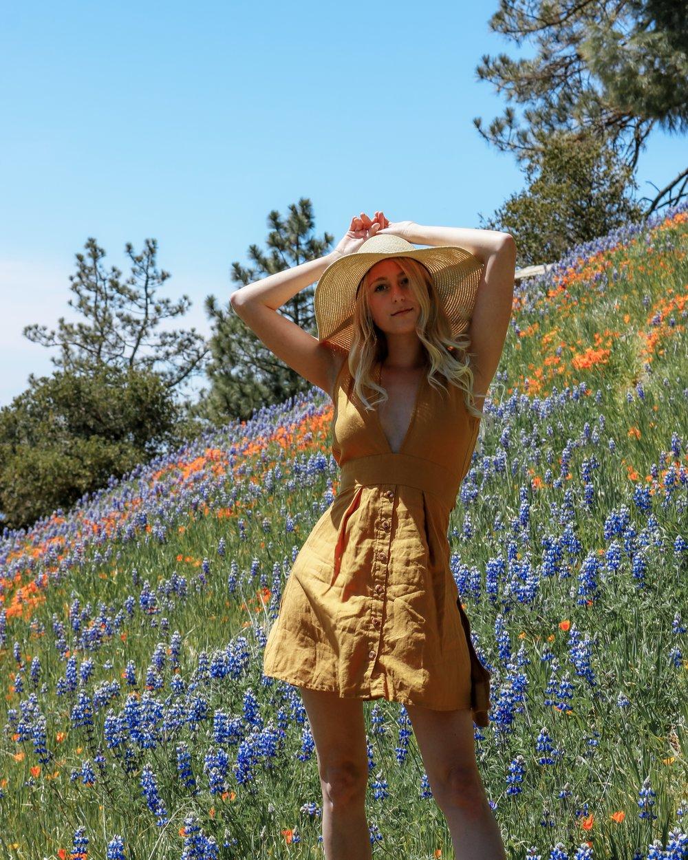 Santa Barbara Super Bloom Figueroa Mountain Santa Ynez