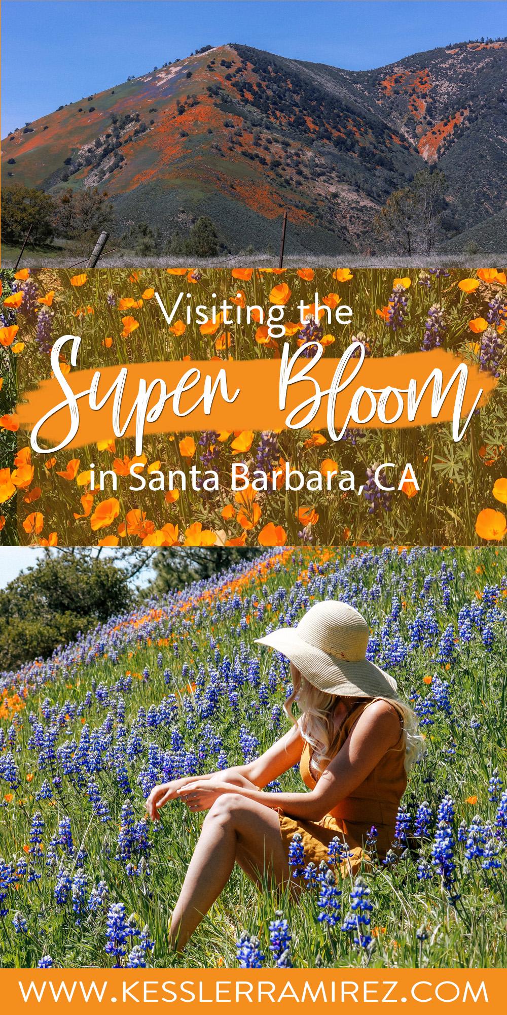California Super Bloom Santa Barbara Figueroa Mountain Santa Ynez