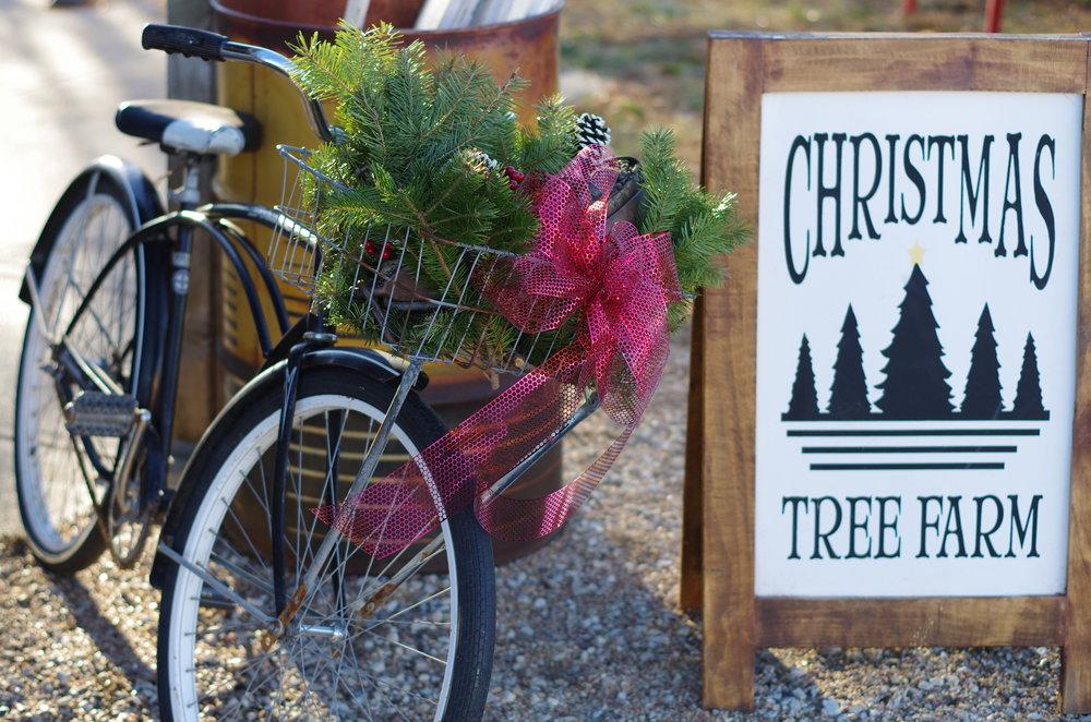 Nordstrom's Tree Farm   Rustic Farm Charm