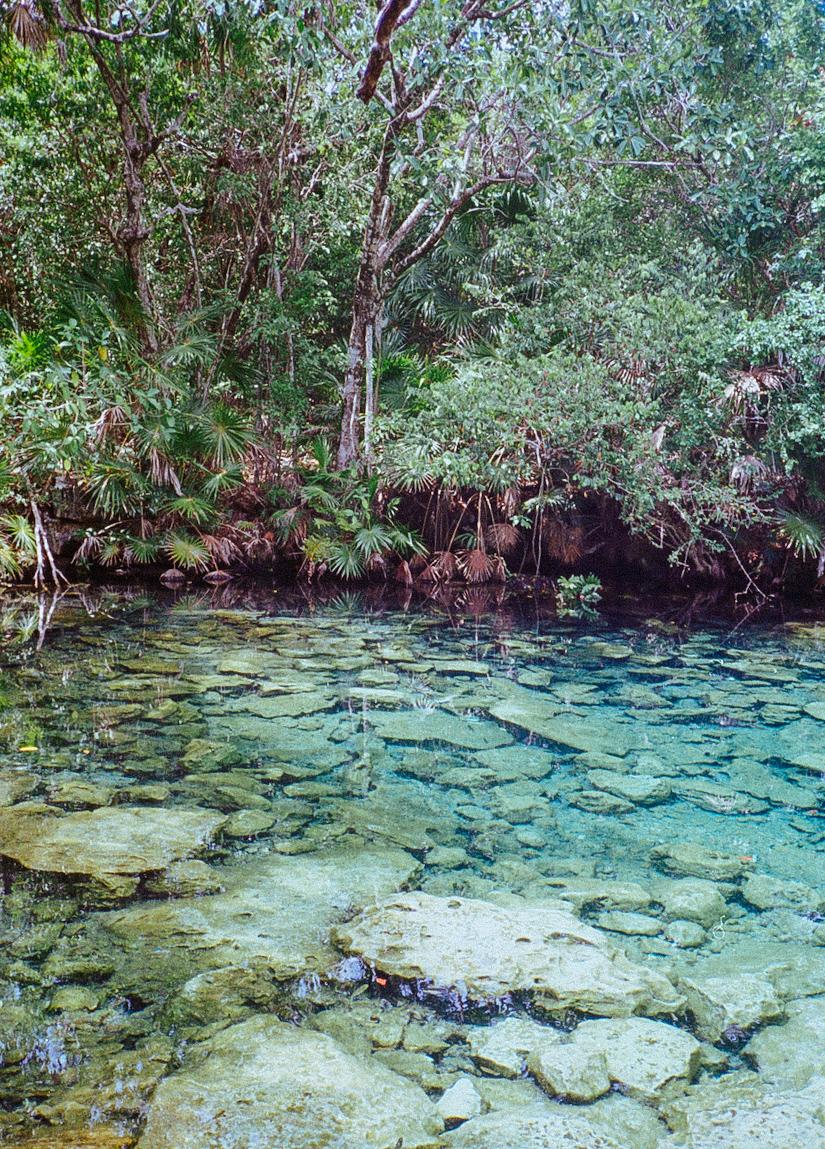 Cenote1.jpg