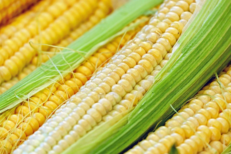 corn-1605664_960_720.jpg