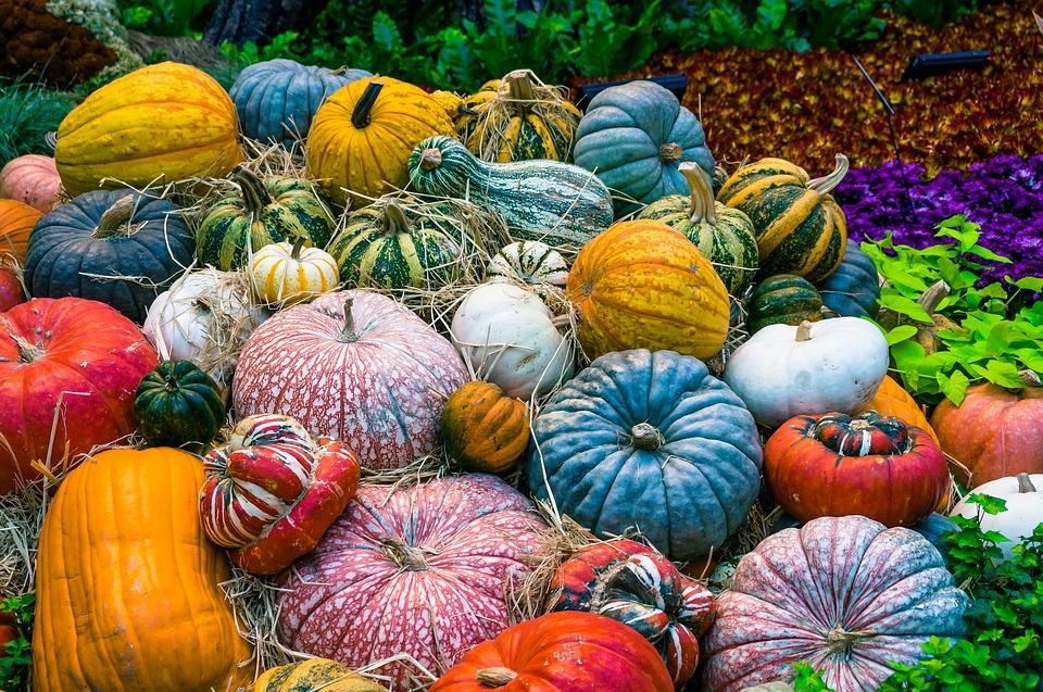 pumpkin-2190584_960_720.jpg