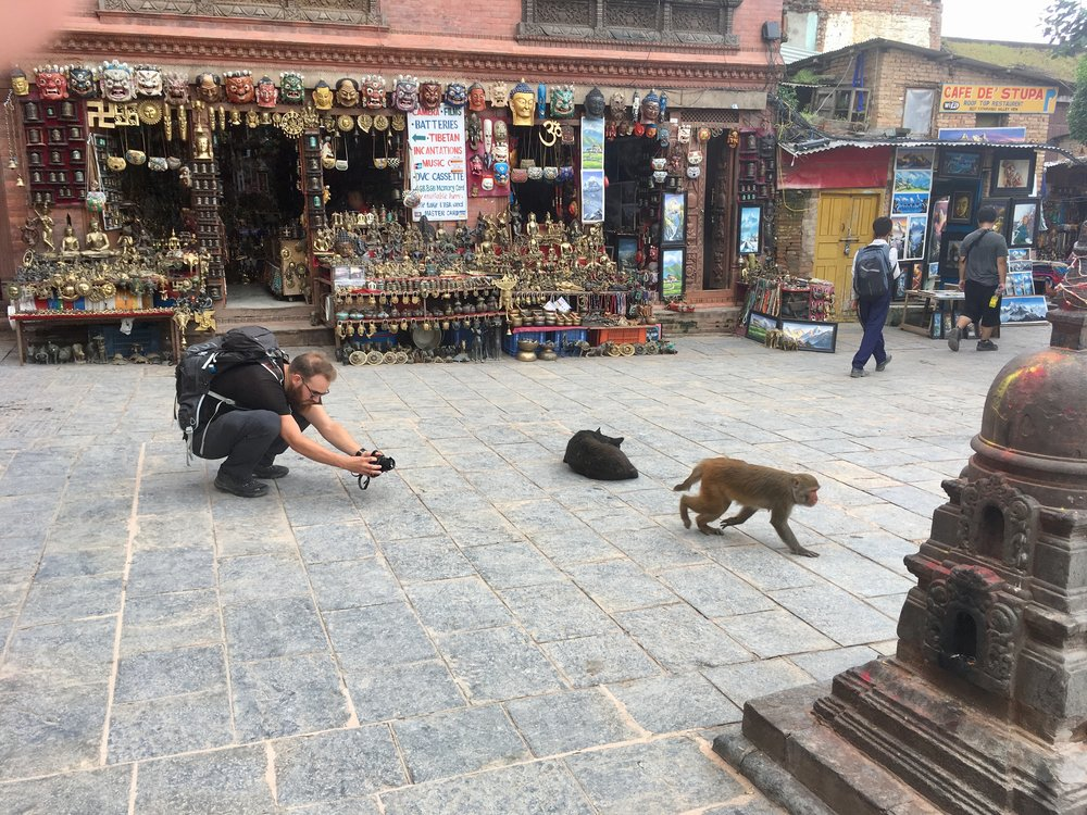 There were stray dogs and monkeys everywhere. We could have watched them for hours, especially when they try and steal food off each other.