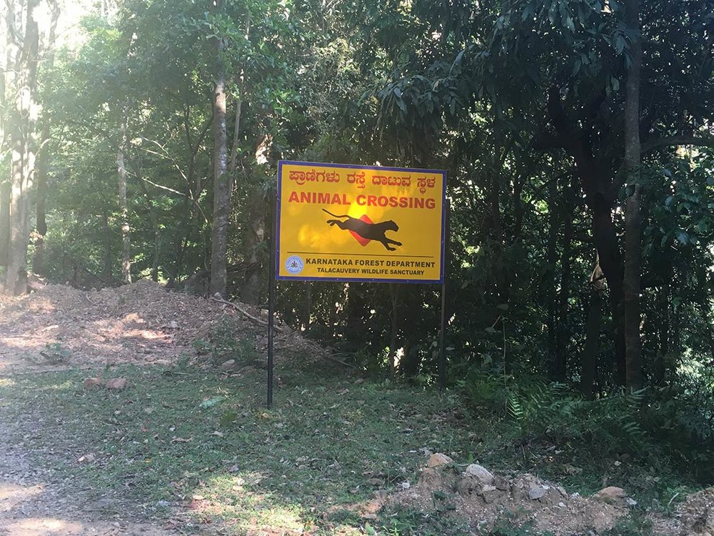The climb took us through Talacauvery Wildlife Sanctuary. The road ran just inside, so we didn't have to pay an entrance fee. We were warned of wild elephants and big cats, but sadly we never saw anything.