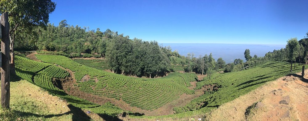 This is a small tea plantation in comparison to some we saw.