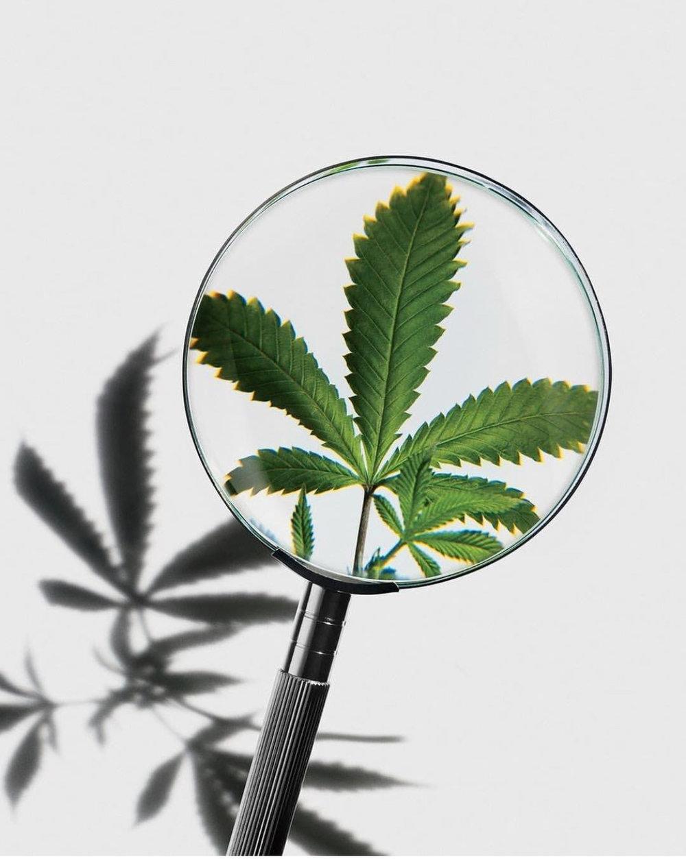 Blogs Cannabis Certification Clinic