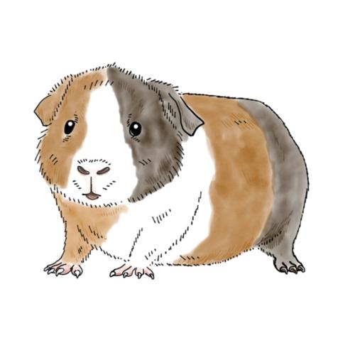 Guinea Pig.png