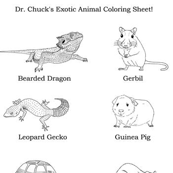 Click Here to download Dr. Chuck's Exotic Animal Coloring Sheet!