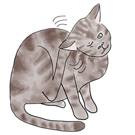 Cat Itch.jpg