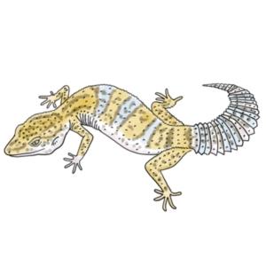 Leopard Geckos!