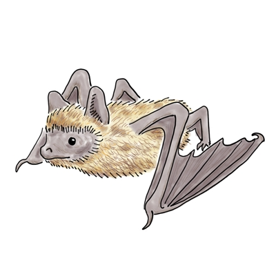 Bats are cute, but they can also spread rabies, which is not cute!