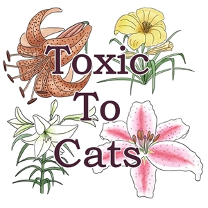Learn about toxic plants here!