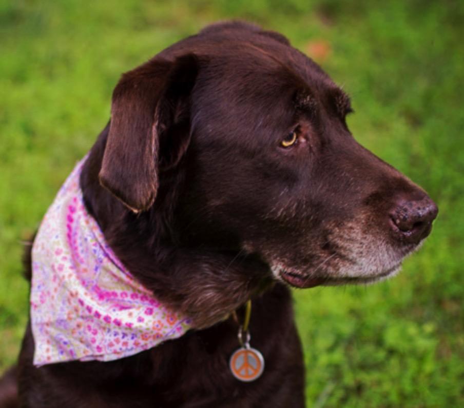 Roxy Therapy Dog Nelly