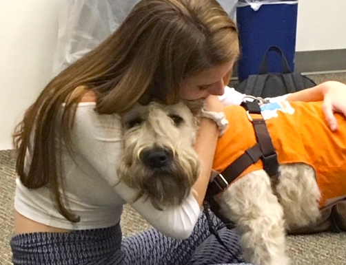 Secondary School Stress Relief - Students suffering from the loss of a parent or struggling with stress and anxiety benefit from the much-needed support and compassion provided by Roxy therapy team dogs.