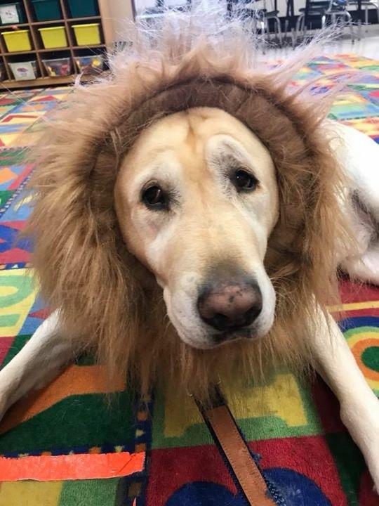 Chloe the Lion